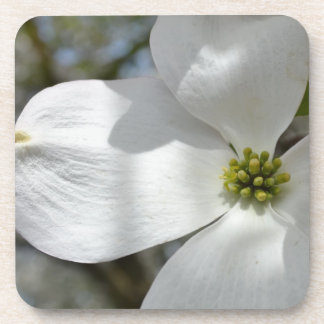 Dogwood Flower Beverage Coasters