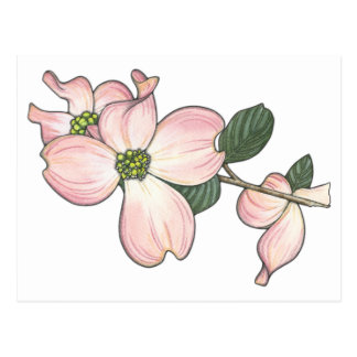 Dogwood Flower Postcard