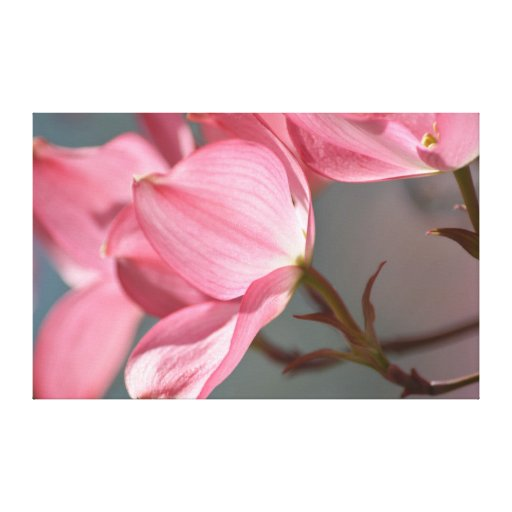 Dogwood Flower Tree Gallery Wrapped Canvas