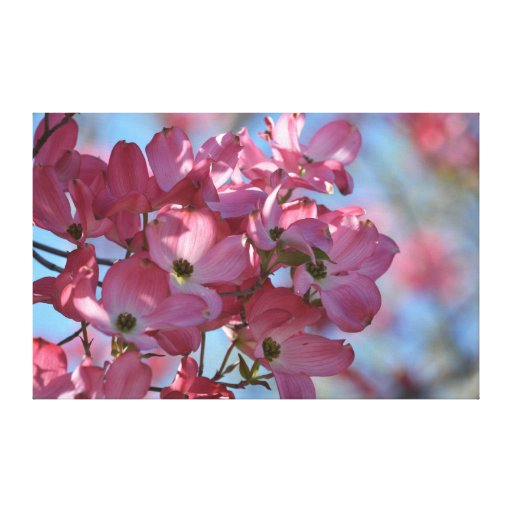 Dogwood Flowers Stretched Canvas Prints