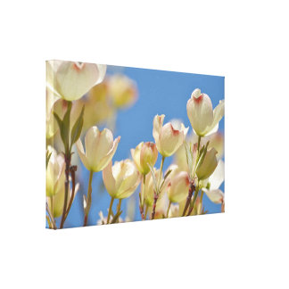 Dogwood Flowers Gallery Wrapped Canvas