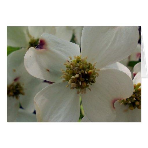 DOGWOOD FLOWERS CARD