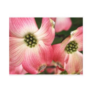 dogwood flowers gallery wrap canvas