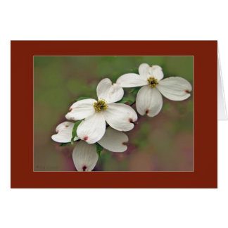 Dogwood Flowers Greeting Card