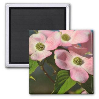 Dogwood Flowers in spring Refrigerator Magnet