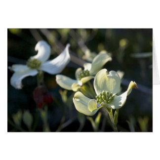Dogwood Flowers Note Card