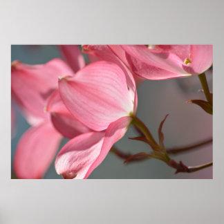 Dogwood Flowers Print