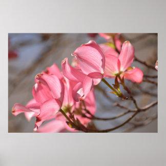 Dogwood Flowers Poster