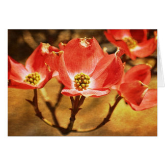 Dogwood Spring Flowers Greeting Card