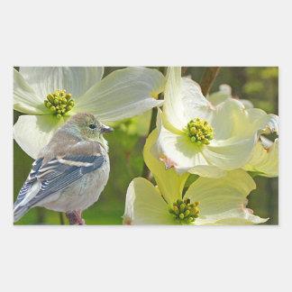 """Dogwood Visitor"" Finch Songbird Rectangular Sticker"