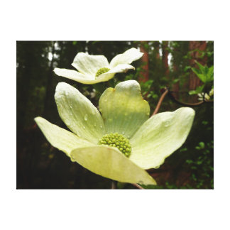 Dogwoods and Redwoods in Yosemite National Park Canvas Print