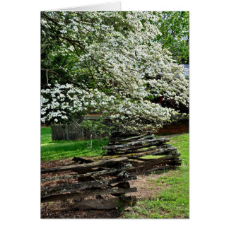 Dogwoods in Tennessee Card