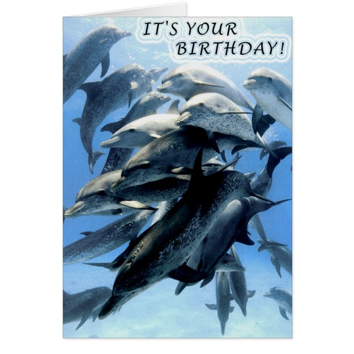 Dolphin birthday party greeting card