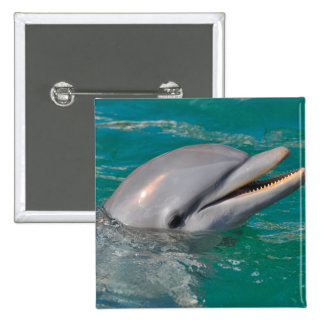 Dolphin Close Up 15 Cm Square Badge