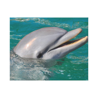 Dolphin Close Up Canvas Print