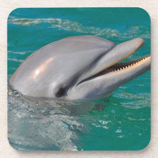 Dolphin Close Up Coaster