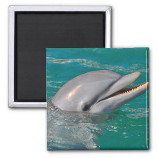 Dolphin Close Up Magnet