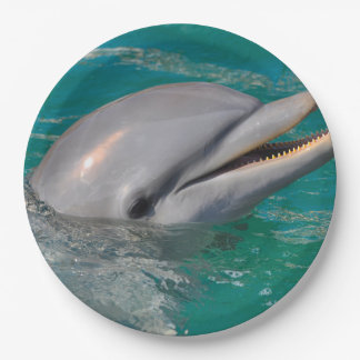 Dolphin Close Up Paper Plate