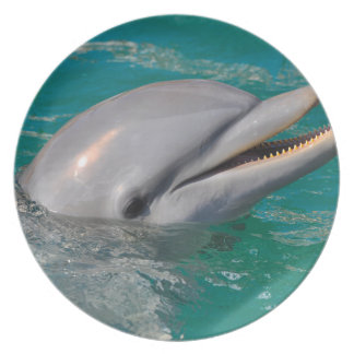 Dolphin Close Up Plate