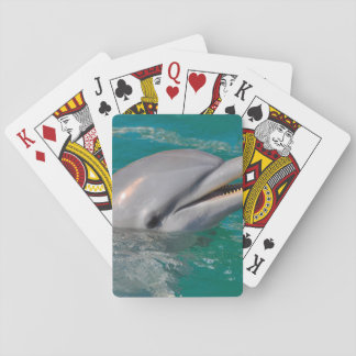 Dolphin Close Up Playing Cards