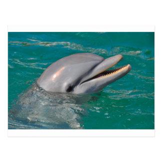 Dolphin Close Up Postcard