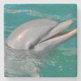 Dolphin Close Up Stone Coaster