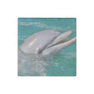Dolphin Close Up Stone Magnet