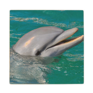Dolphin Close Up Wood Coaster
