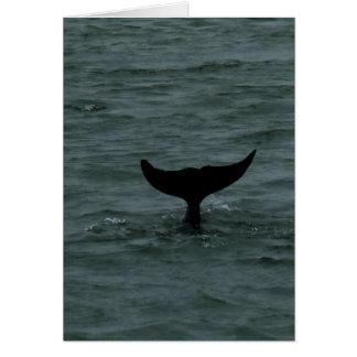 Dolphin Fluke Card