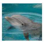 Dolphin Friend Print