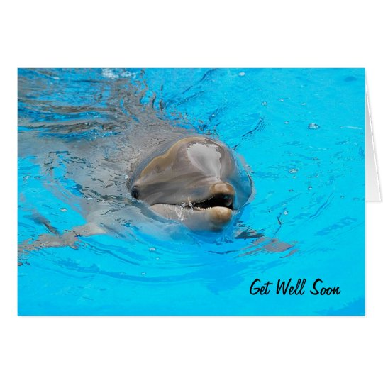 Dolphin Get Well Card