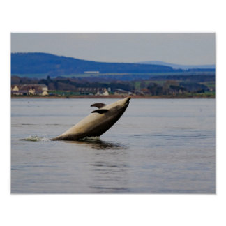 Dolphin having fun poster