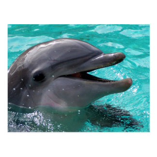 Dolphin head in aquamarine water postcard