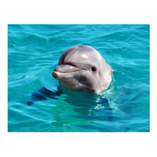 Dolphin in Blue Water Photo Postcard