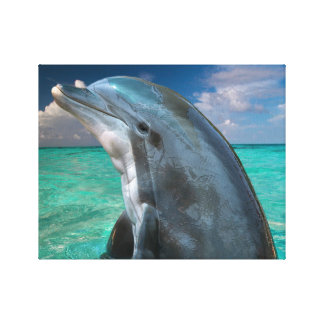 Dolphin in the Bahamas Stretched Canvas Prints