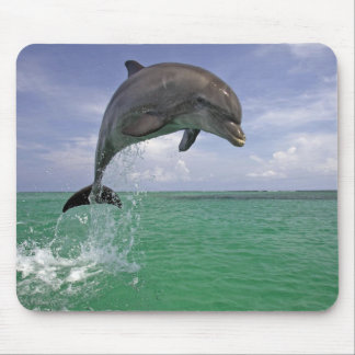 Dolphin in the wild Jumping Mouse Pad