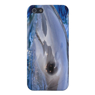 Dolphin iPhone 4G Case Case For iPhone 5/5S