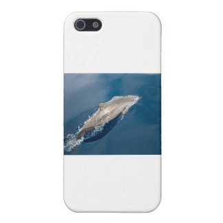 Dolphin iPhone 5 Cases