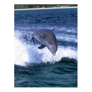 Dolphin jumping, Grand Bahama, Bahamas Postcard
