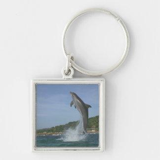 Dolphin jumping, Roatan, Bay Islands, Honduras Silver-Colored Square Key Ring