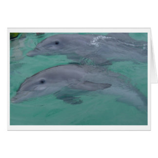 Dolphin Note Cards