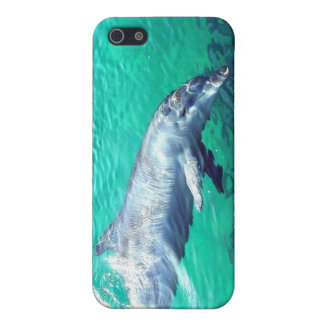 Dolphin Photo 4  Case For iPhone 5/5S