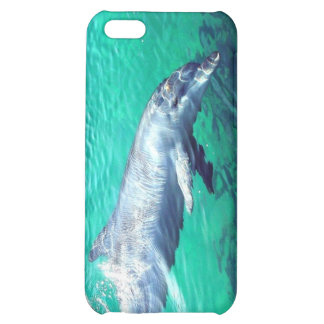 Dolphin Photo 4  Case For iPhone 5C