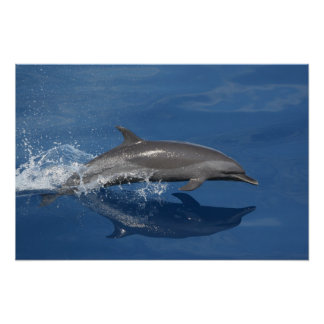 Dolphin Photo Posters