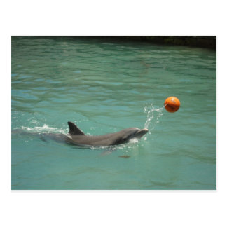 Dolphin playing ball post card