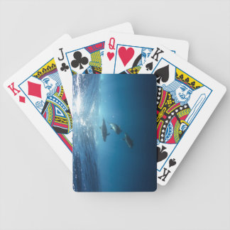 Dolphin pod swimming underwater bicycle playing cards