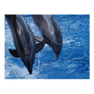 Dolphin Show Postcard