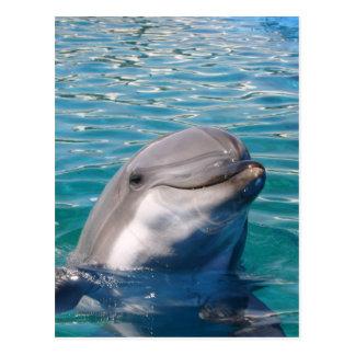 Dolphin Smile Postcard