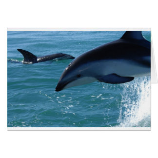 Dolphin Splash Destiny Beach Ocean Nature Card
