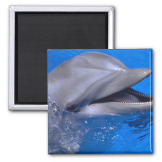 Dolphin Square Magnet